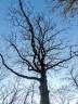 les arbres en fôret de Montmorency